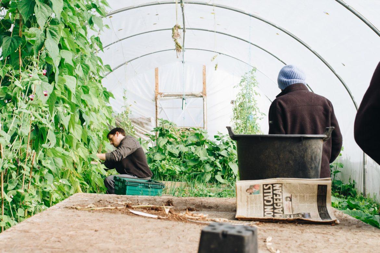 Mand laver havearbejde i drivhus
