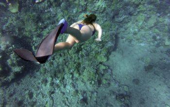 Derfor burde du prøve dykning